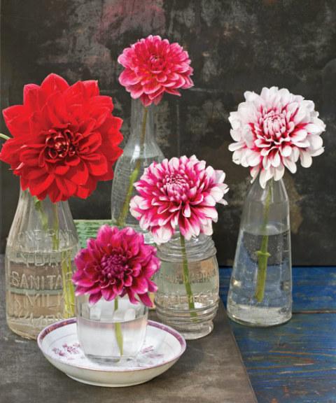 Five Bud Vases