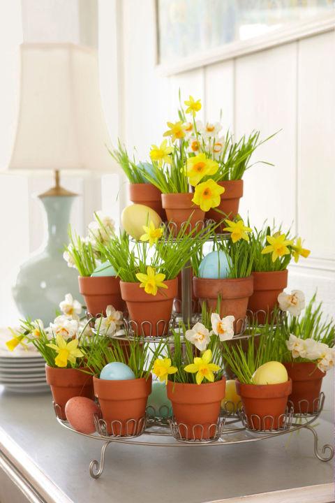 Tiered Daffodils
