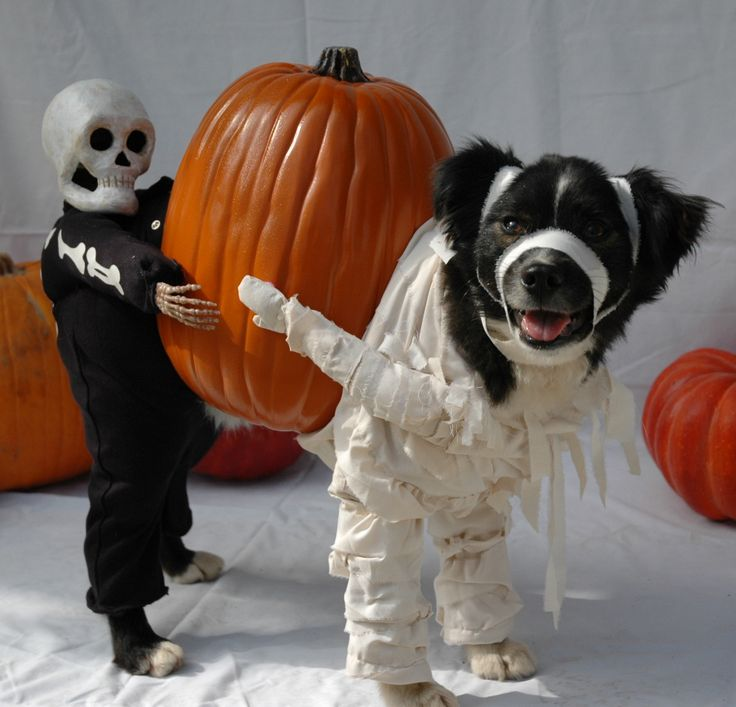 48 mummy dog and his skeleton friend with pumpkin via pinterest