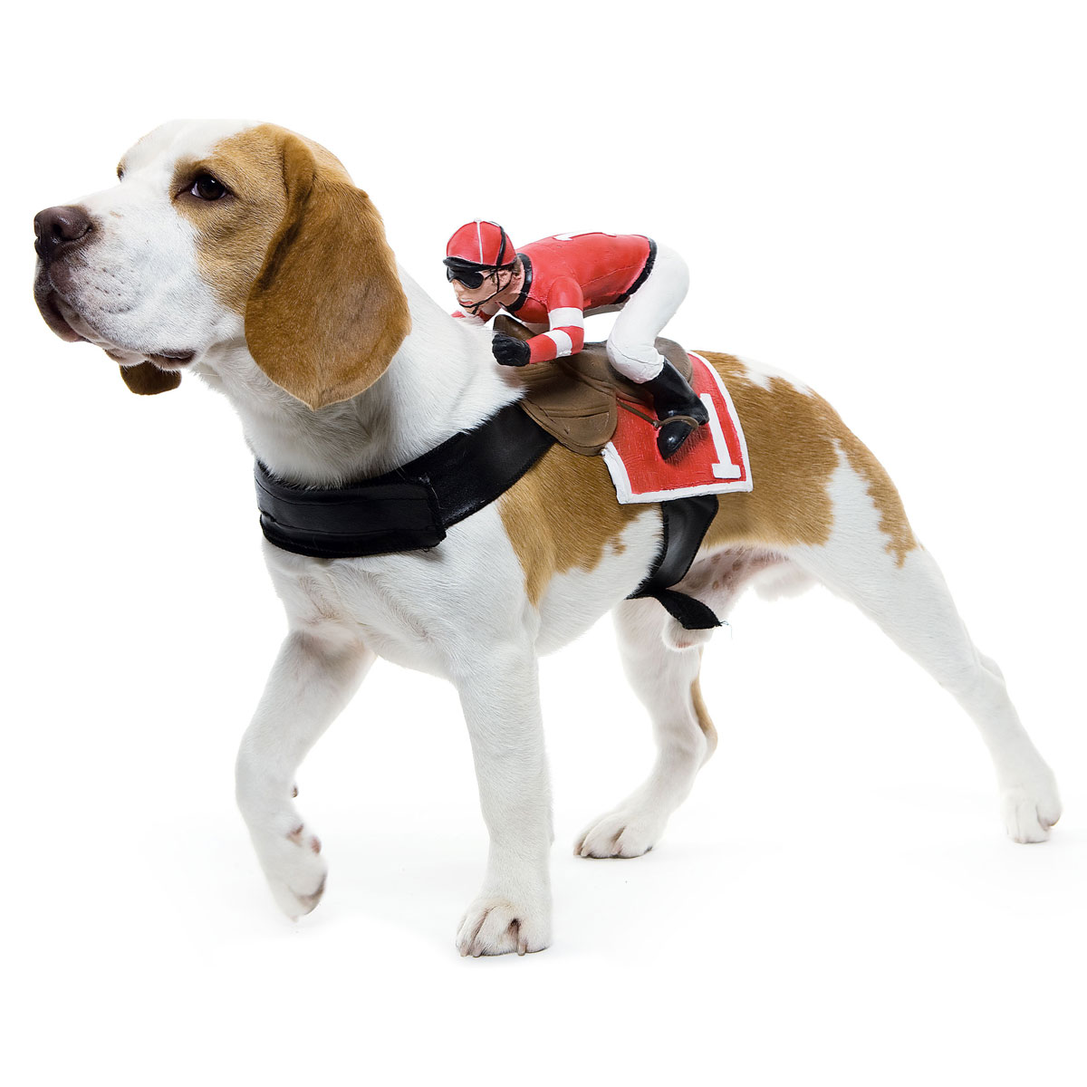 32 Puppy Horse Harness Racing Costume Via The Green Head