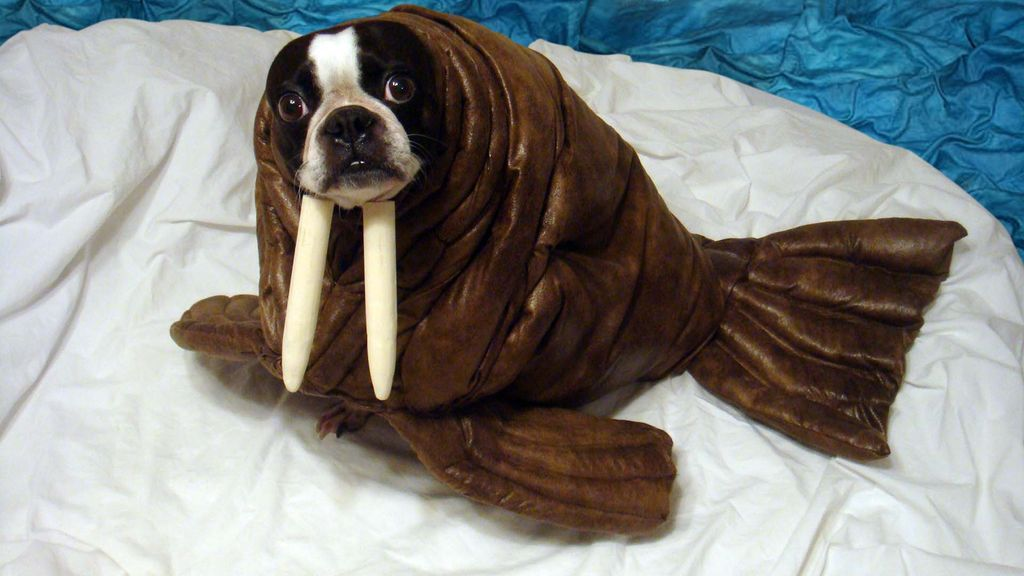 6 Walrus Pet Halloween Costume via instructables : halloween costumes animal  - Germanpascual.Com